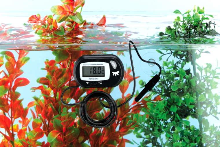 Какой должна быть температура воды в аквариуме?