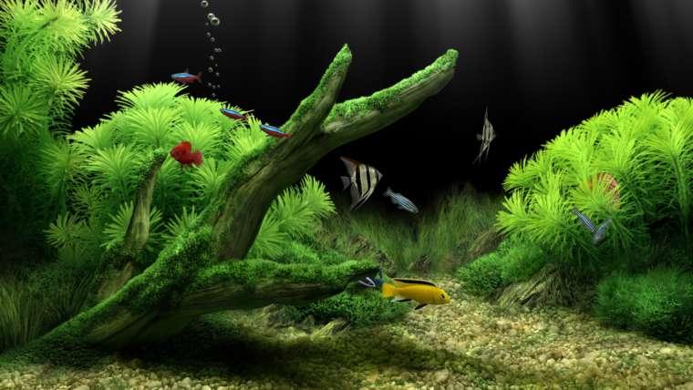 Что нужно для аквариума — первые шаги