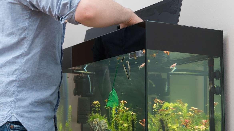 Как помыть аквариум?