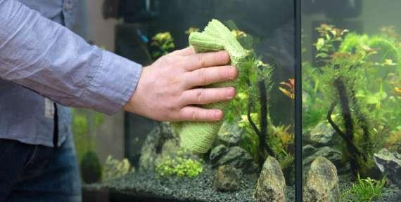 Основные правила и манипуляции по уходу за аквариумными рыбками
