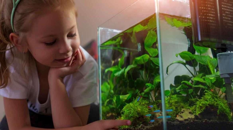 Нано-аквариум 10л