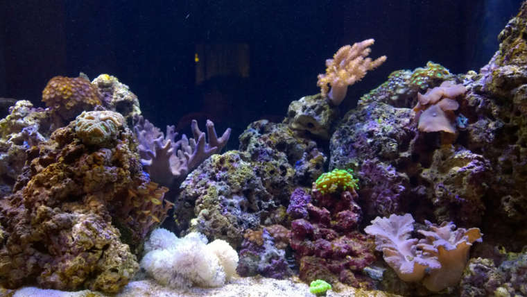 Морской аквариум: это не страшно!