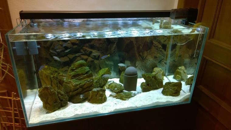 Биотопный аквариум: что это за чудо?