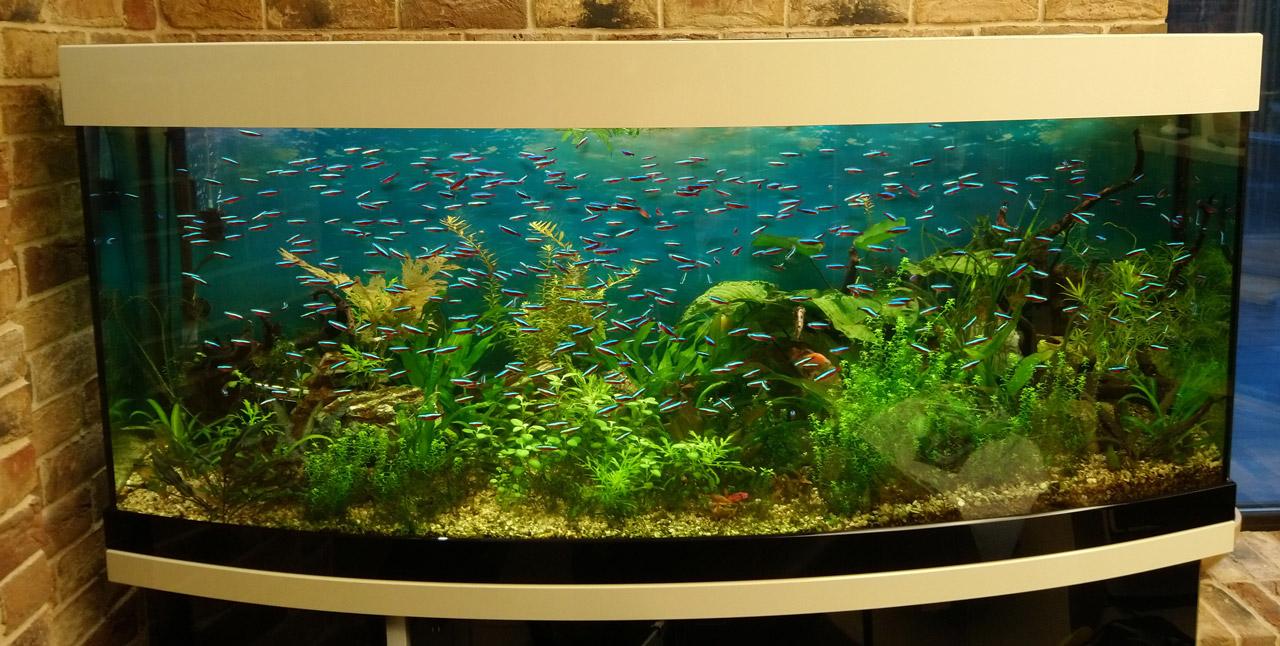 Аквариум с живыми водными растениями