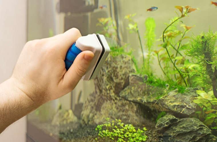Как и когда чистить аквариум