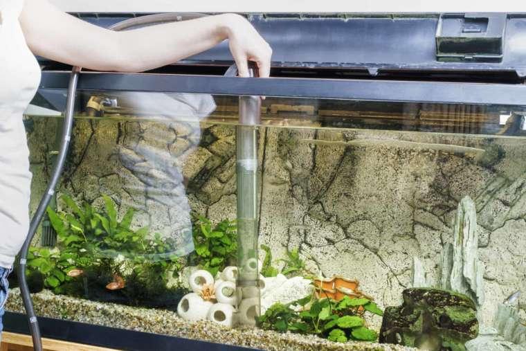 Как ухаживать за аквариумными рыбками?